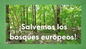 """Foto de un bosque con texto """"salvemos los bosques europeos"""""""